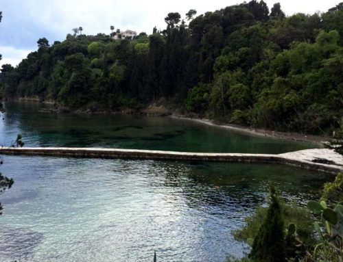 The enchanted forest of Corfu- Mon Repos